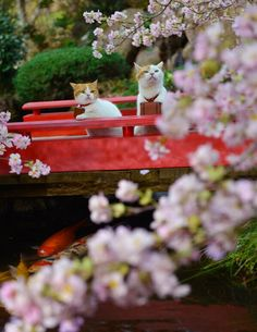 "bullzara: """"twitter.com 本日も〜お花見ですにゃ〜♪ "" """