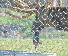He's rescuing the marmot. Gotta read the story. http://n7qvc.wordpress.com/2011/12/14/elk-stuns-idaho-zookeepers/