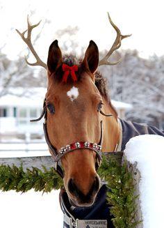 christmas animals | Christmas and Animals