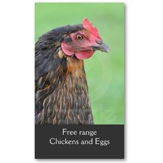Free range chicken eggs business card with a portrait of a black hen. Price varies according to size, qty and card stock.