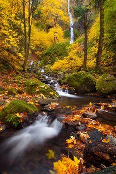 Color Feast by Michael Bollino ~ Columbia River Gorge, Oregon, USA**