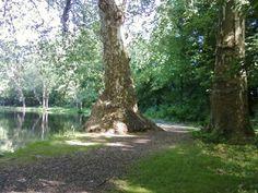 Károlyi park