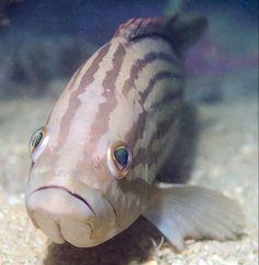 Ocean fish acquire more mercury at depth