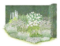 """Rosenzauber-Kollektion: Brautzauber Ein Traum in Weiß ist das Rosenbeet """"Brautzauber"""". Die beliebteste weiße Strauchrose, """"Schneewittchen"""", bildet den Mittelpunkt dieses Arrangements. Sie ist ausgesprochen reichblütig und zeigt..."""