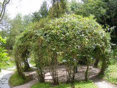 belle idée de cabane végétale en osier vivant - un coin de jeu et de détente pour enfants et adultes