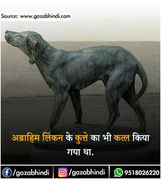Dogs in Hindi । कुत्ते के बारे में 30 रोचक तथ्य - ←GazabHindi→ Wierd Facts, Wow Facts, Intresting Facts, Real Facts, Funny Facts, Gk Knowledge, General Knowledge Quiz Questions, Knowledge Quotes, Motivational Picture Quotes