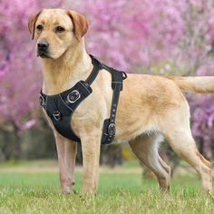 Idepet Front Range NoPull Dog Harness with Handle Adjustable Reflective Pet Harness Vest Easy Control for Small Medium Large Dogs Training Walking Hiking Black L * Want to know more, click on the image.-It is an affiliate link to Amazon. #PetHarnessesLeashes