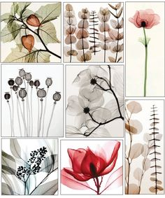 "Floral x-ray prints from Steven N. Meyers. He has combined the process of photography and radiography to create pictures that are certainly unique. In his words, ""By using x-rays instead of light, an unusual inner vision can be revealed, and nature shows us textures, details and shadows that would otherwise not be seen""."