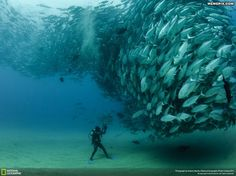 Underwater in Mexico - MemePix. Holy Dooley! What a fabulous photo.