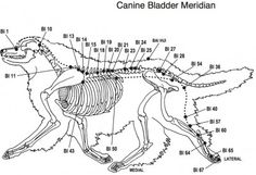 Acupressure for Dogs!