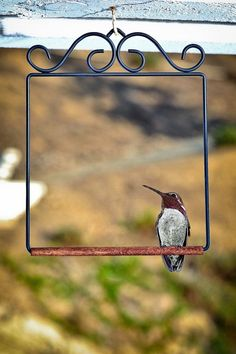 Need to give my Hummingbirds a pirch. Great idea. ;)