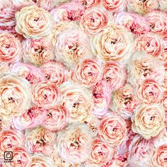 Pics For > Pink Peonies Background