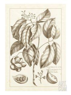 Sepia Exotics II Art Print by Pierre Buchoz at Art.com