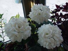 3 lg stem Seashell Shell Flowers  CAY CAY SHELLS ART SNOWBALL