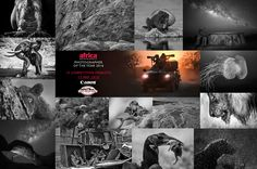 Finalists: Africa Geographic Photographer of the Year 2016 - Africa Geographic Magazine Beautiful Outfits, Beautiful Clothes, Year 2016, African Safari, Tanzania, Animal Pictures, To Go, Gallery, Movie Posters