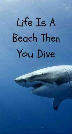 Here is a collection of scuba diving and ocean quotes, from some of the most famous sea-lovers in history!