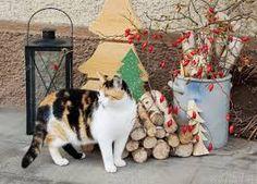 Výsledek obrázku pro vánoční venkovni dekorace