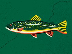 Brook Trout designed by Brad Woodard. Connect with them on Dribbble; the global community for designers and creative professionals. Trout Fishing, Fly Fishing, Tuna Fishing, Fishing Poles, Fishing Box, Fishing Knots, Drawing People, Drawing S, Design Thinking