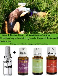 flea/tick/mosquito spray: up to 15 drops (total) of oils in a 14oz spray bottle. Shake well, mist your dog daily. Spray on bedding, around doorways & baseboards to keep insects out. *Mist your own skin, hair & clothing when outside. Place a few drops of essential oil on dog's collar. Renew when aroma fades. Few drops of the oils into palms of hands, rub palms together, apply to dog's coat & skin starting at neck, down front legs, down back to the base of the tail and down back legs