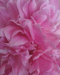 Ибо красота есть место, где глаз отдыхает.  Иосиф Бродский #flowers #flower #InstaTags4Likes #petal #petals #nature #beautiful #love #pretty #plants #blossom #sopretty #spring #summer #flowerstagram #flowersofinstagram  #flowerslovers #flowerporn #botanical #floral #florals #insta_pick_blossom #flowermagic #instablooms #bloom #blooms #botanical #floweroftheday http://gelinshop.com/ipost/1524668927581811270/?code=BUotk_ElvJG