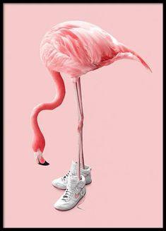 Here you will find animal posters and prints with elephants, cats, lions, butterflies and wildlife. Find your favourite animal art at Desenio! Desenho Kids, Buy Posters Online, Online Art, Prints Online, Flamingo Art, Flamingo Funny, Flamingo Tattoo, Foto Poster, Animal Posters
