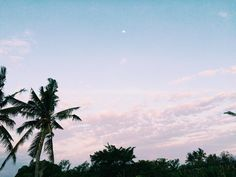 Day moon palm trees sunset sky