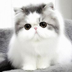 We present to you TOP 30 Cute Cats and Cute Kittens picture gallery. I love cute cats too. I think you like little kittens too. Cats and little kittens are one Pretty Cats, Beautiful Cats, Animals Beautiful, Pretty Kitty, Lovely Eyes, Beautiful Pictures, Cute Kittens, Baby Animals, Cute Animals