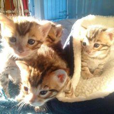 Kittens van Joel