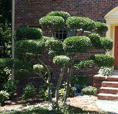 Bilderesultat for tree cut shaping