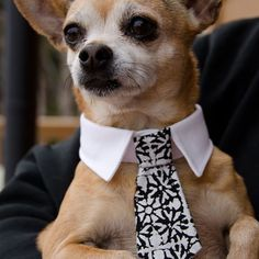 Shirt-style Dog Collar or Cat Collar with a set of regular ties and bow ties on Etsy, $36.00