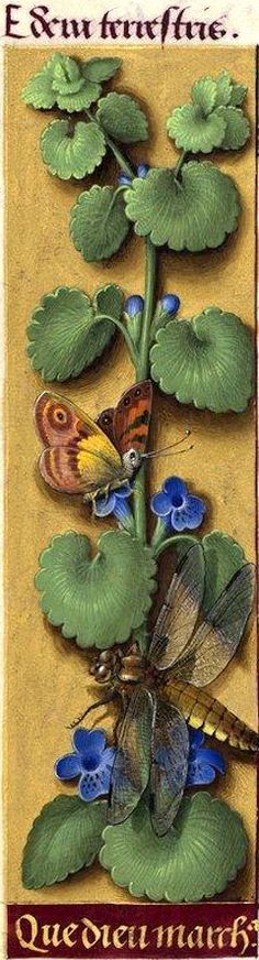 Que Dieu march[and]a - Edera terrestris (Glechoma hederacea L. = lierre terrestre) -- Grandes Heures d'Anne de Bretagne, BNF, Ms Latin 9474, 1503-1508, f°45v