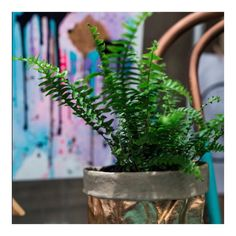 Really love this shot from Friday #fern#beautiful#abstract#abstractart#colourful#fun#boho#kreoloveslocal#homedecor#beachydecor by onebeautifulthing34 #beachydecor