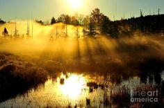 Wetlands Photograph by Terri Gostola in FineArt America-