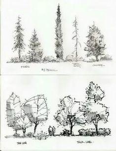 архитектурная графика деревья: 7 тыс изображений найдено в Яндекс.Картинках