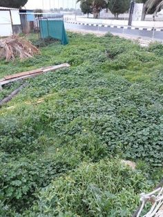 Code No:10363 A residential plot for sale in the Ypsoupoli area in Limassol.