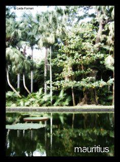 Mauritius Pamplemousses Garden
