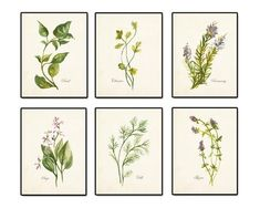 Watercolor Herbs Print Set 2 - Botanical Print Set