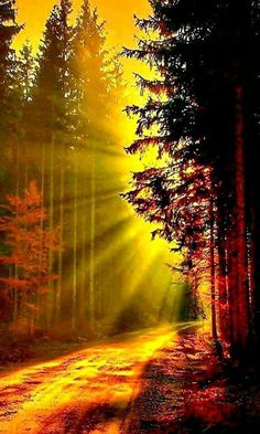 Sun Rays through the trees at Sunrise