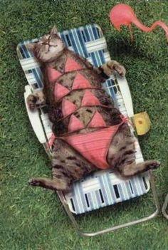 sunbathing...so funny