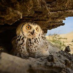 Nido nel deserto - Fotografia di Husain Alfraid