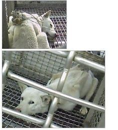 """Pls help by signing this Petition · only 15.494 signatures in 4 years. (engl. Text below - anyone can sign ) South Korea: Please stop the torture and consumption of dogs and cats Please watch this S. Korea's """"Dog Meat Market Undercover Video"""" and share it with everyone! http://animalrightskorea.org/dog-meat-issue/dog-meat-market-undercover-video.html Change.org - 14.635/2015-08-15 #Petition #DogMeat #AnimalRights #SouthKorea 15.494//10-14-2015"""
