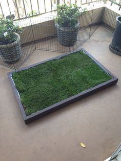 Dog Grass Pad Filled With Real Dog Potty Grass. Get One At Www.  Doggyandthecity