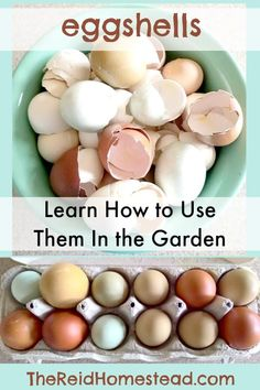 to Use Egg Shells in the Garden -Supplement your soil and feed your plants with eggshells! The Reid HomesteadHow to Use Egg Shells in the Garden -Supplement your soil and feed your plants with eggshells! The Reid Homestead Gardening For Beginners, Gardening Tips, Gardening Zones, Egg Shells In Garden, Bokashi, Home Vegetable Garden, Growing Vegetables, Gardening Vegetables, Organic Gardening