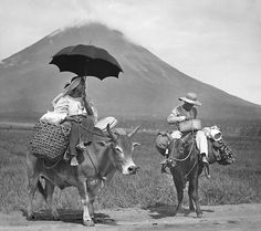 One way of going somewhere in the Philippines if you don't want to walk, Mayon Volcano, Luzon, Philippines, early 20th Century