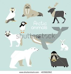 Collection of flat icons of arctic animals. Bear,hare, whale, caribou, owl, walrus,puffin, musk ox.