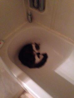 Found my cat sleeping in the bath tub :)