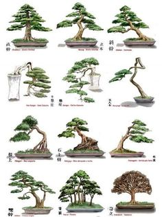 estilos bonsai - Pesquisa Google #japanesegardens