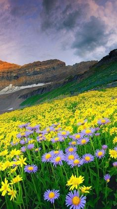 Beautiful world, beautiful photos of nature, Beautiful Nature Pictures, Amazing Nature, Nature Photos, Beautiful Landscapes, Beautiful World, Beautiful Places, Flower Landscape, Landscape Photos, Landscape Photography