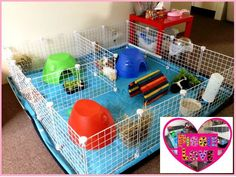 Free Local Classifieds Ads from all over Australia, Buy and Sell in your local area - Gumtree C&c Cage, Find Pets, Hamsters, Ferret, Guinea Pigs, Rabbits, Turtles, Sydney, Elsa