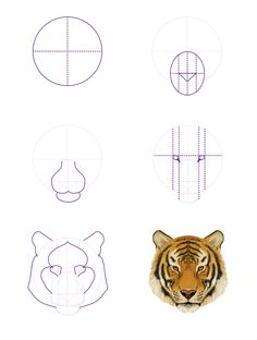 How to Draw Animals: Big Cats, Their Anatomy and Patterns